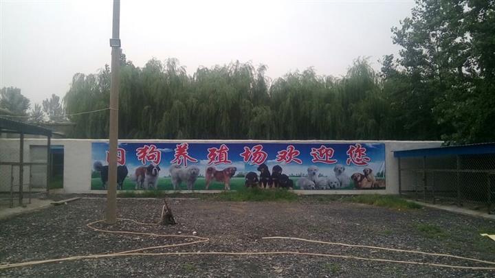 五家渠市肉狗养殖场庆元县肉狗养殖场