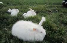 铜仁市哪里有獭兔养殖场
