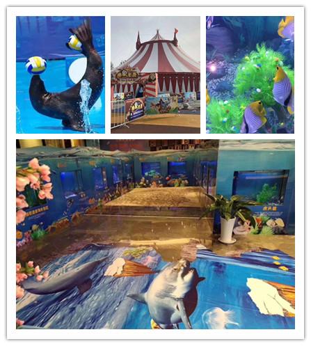 承接商演深圳哪里有海狮表演出租