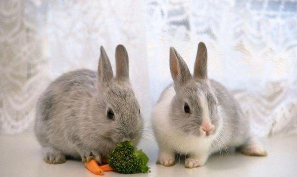 铜川市山东哪里有种兔养殖场