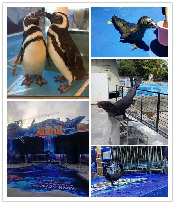 常州热搜企鹅展览出租海狮表演租赁价格