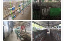 单县哪里有肉兔獭兔新西兰兔养殖场欢迎你的到来