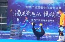 呼和浩特托克托海狮表演出租一天多少钱活动新颖