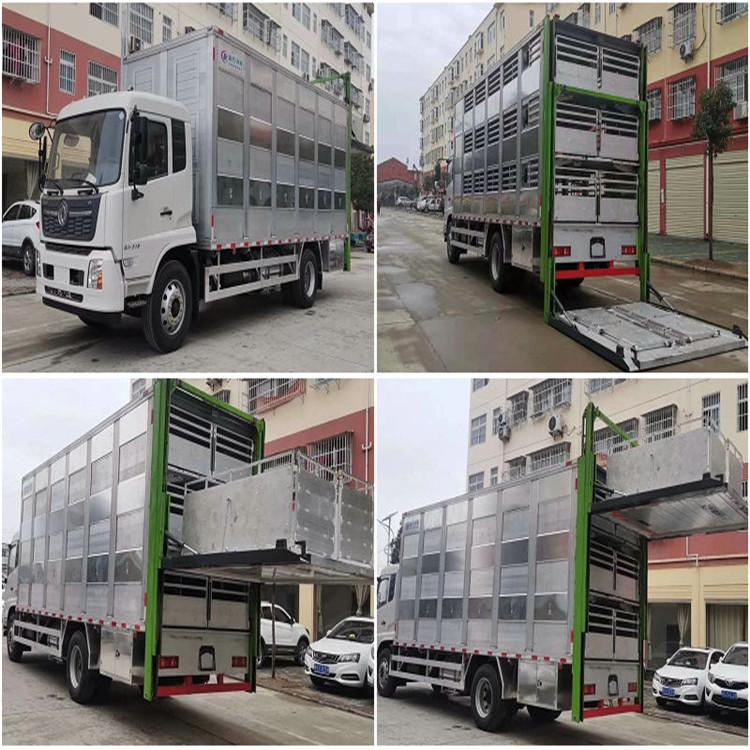 牲禽运输三层拉牛羊猪车东风天龙三层拉猪运输车
