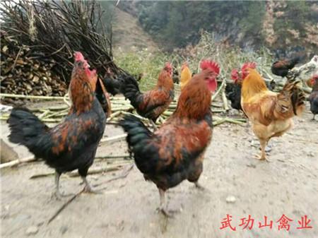 罗曼粉批发市场_崇仁