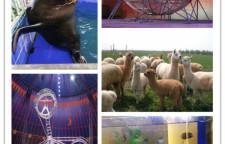 安徽阜阳海洋生物鱼缸展出租联系电话