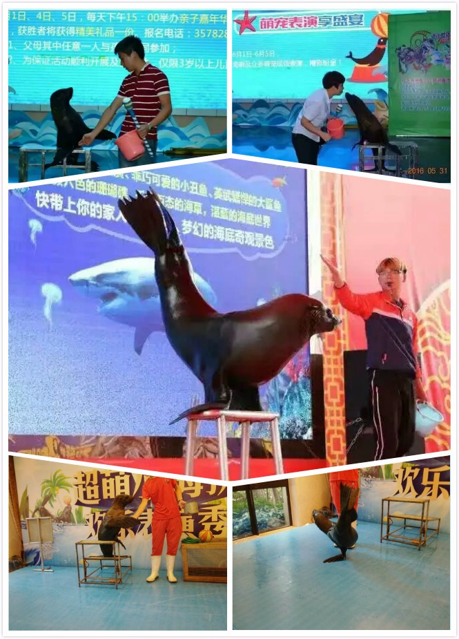 鄂州市海狮表演当地出租承接商演