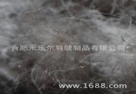 50灰鸭大朵 新国标50%灰鸭大朵绒 水洗绒 米乐尔羽绒厂家直销批发