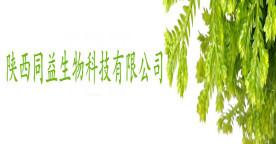 辣木叶粉 高蛋白低脂质高纤维 辣木粉 厂家批发