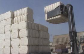 長期供應質量穩定的各種原棉填充棉花棉短絨皮棉