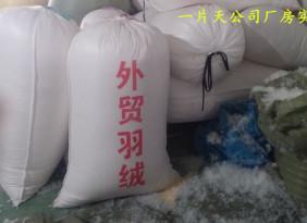 灰鸭绒 50%灰鸭绒 厂家批发直销价格 羽绒制品填充物