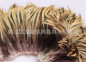 供应银边项毛,鸡颈毛公鸡尖毛 diy羽毛装饰