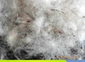 广东深圳 厂家直销 羽绒批发 国标 水洗羽绒 80%灰鸭绒
