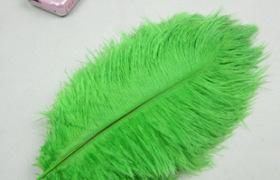 廠家直銷15-20cm鴕鳥毛 染色鴕鳥羽毛 室內插花工藝 量大從優