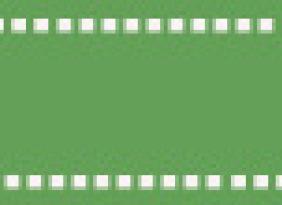 劍麻低價批發 綠化苗木 優質劍麻 劍麻苗 規格齊全 街道綠化苗木