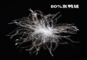 欧标I级羽绒 80/20灰鸭绒 绒朵大 蓬松度高 清洁度高 无异味 批发