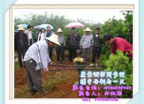 全自动挖坑机 拖拉机带挖坑机 人工手动挖坑机 植树挖坑机 植树帮