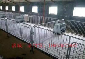 厂家生产 猪漏粪板  猪塑料网板  保育床  漏粪地板