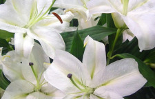 海口春节送礼花卉到海南神农盛世