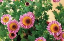海口春节将至,鲜花绿植花卉增添气氛