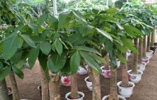海口盆栽花-盆栽植物出售