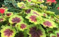 海口绿色植物盆栽到哪选购最好?