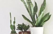 适合海口室内绿植盆栽去哪买比较好?