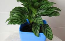 海口家中摆放的洋气绿植盆栽去哪买?