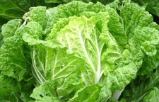 江津双福专业的生鲜蔬菜配送哪家好公平交易欢迎大神指导