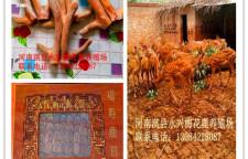 河南永兴梅花鹿养殖场为您科普梅花鹿讲解带血茸的加工方法欢迎加QQ了解