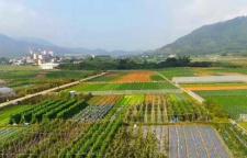 日出而耕的有机蔬菜为何如此受欢迎