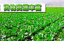 深圳福鸿康教您如何保持蔬菜的新鲜口感