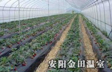 让蔬菜大棚带你开启致富门——一个大棚的自我修养